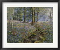 Framed Bluebell Wood