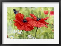 Framed Poppies And Butterfly