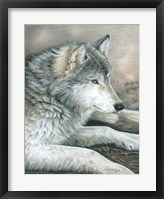 Framed Calm Wolf