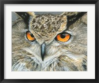 Framed Orange-Eyed Owl