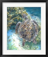 Framed Swimming Turtle