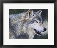 Framed Timber Wolf Dark