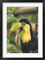 Framed Toucan Bill