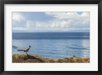 Framed Road Runner View