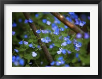 Framed Blue Little Flowers