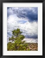 Framed Big Beartree