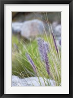 Framed Purple Wild Grass I