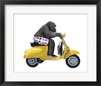 Framed Monkeys Riding Bikes #4