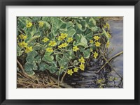 Framed Marsh Marigolds
