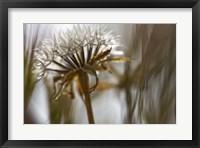 Framed Antelope Valley II