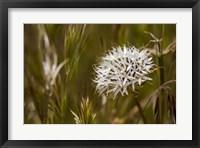 Framed Antelope Valley