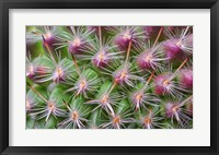 Framed Cactus II