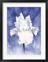 Framed Regal Bloom