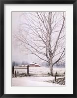 Framed White Birch