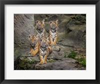 Framed Malayan Tiger Cubs Oil Paint