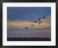 Framed Sandhill Cranes At Sunrise