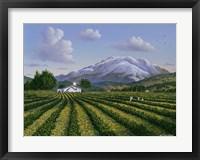 Framed Mount Sta Helena - Napa Valley