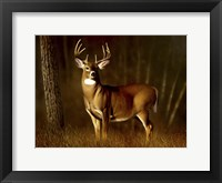 Framed Whitetail Buck