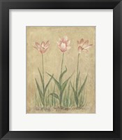 Blooming Tulips II Framed Print