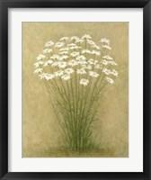 Floral C Framed Print