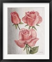 American Classic Rose Framed Print