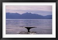 Framed Humpback Whale in Alaska, USA