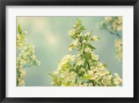 Spring Beauty II Framed Print