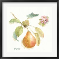 Orchard Bloom II Framed Print