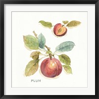 Orchard Bloom IV Framed Print
