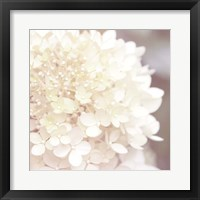 Framed Hydrangea Dream I