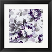 Scent of Roses Plum II Framed Print