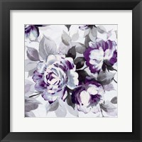 Scent of Roses Plum III Framed Print
