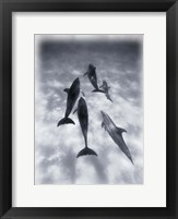 Framed Black and White Dolphins Swimming
