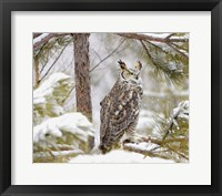 Framed Owl in a Snowy Tree