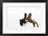 Framed Black and Brown Horse in Snow