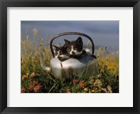 Framed Kitten on Tea Pot in Field