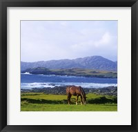 Framed Single Brown Horse in Field