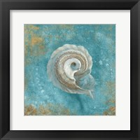 Treasures from the Sea III Aqua Framed Print