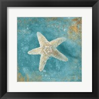 Treasures from the Sea IV Aqua Framed Print
