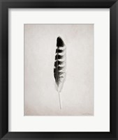 Feather IV BW Framed Print