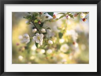 Blush Blossoms I Framed Print