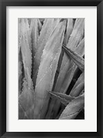 Abstract Agava II Framed Print