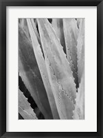 Abstract Agava IV Framed Print