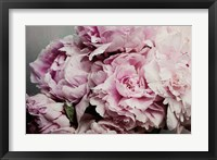 Framed Peonies Galore II