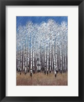 Cobalt Birches II Framed Print