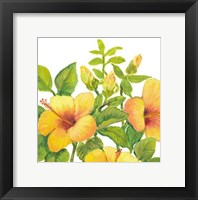 Watercolor Hibiscus I Framed Print