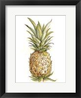 Pineapple Sketch II Framed Print