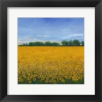 Field of Sunflowers II Framed Print
