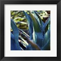 Succulent Vibes II Framed Print