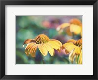 Framed Mellow Yellows II
